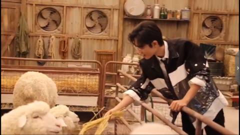 [新闻]191206 肖战品牌活动拍摄花絮,酷炫肖兔子在线投食小羊羔