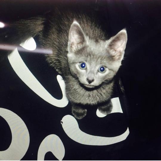 公开了小猫的照片:我们的小家伙