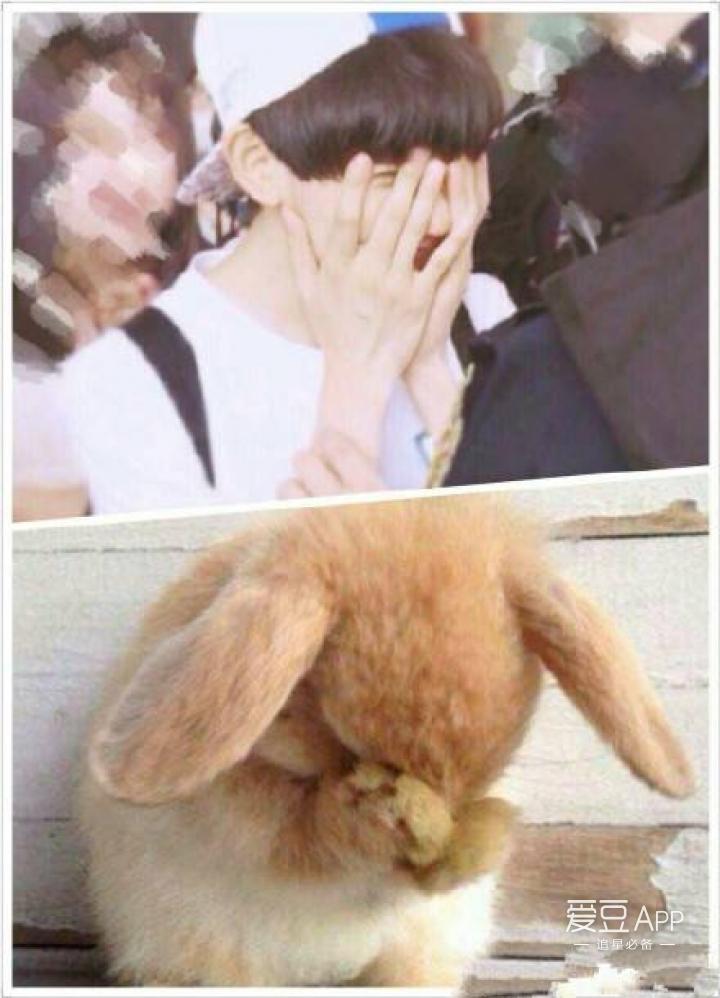 嘴巴塞得鼓鼓的;大吃一惊的表情,张大了嘴巴,瞪圆了眼睛,跟小兔子一样