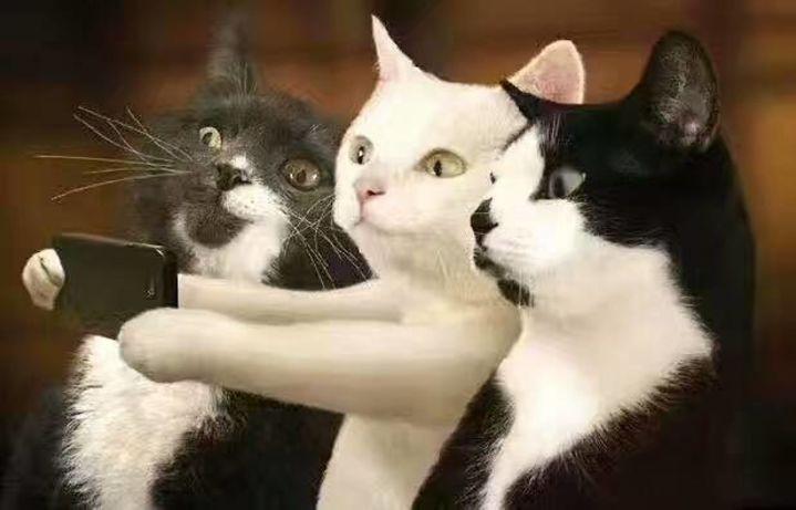 壁纸 动物 狗 狗狗 猫 猫咪 小猫 桌面 719_461