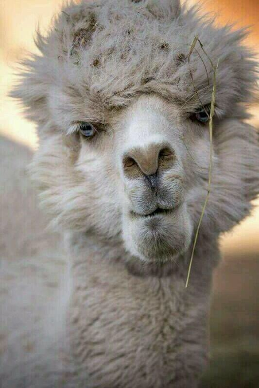 最丑的动物头像