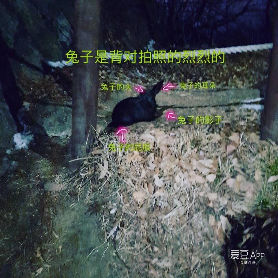 [exo][新闻]170129 小动物狂热者灿烈上线分享:和