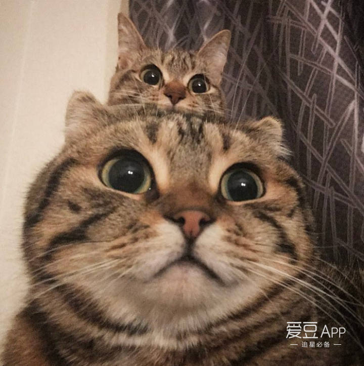 可爱中透着霸气~ 看来,妮妮们的凡宝宝是想要装成小老虎的一只小猫咪