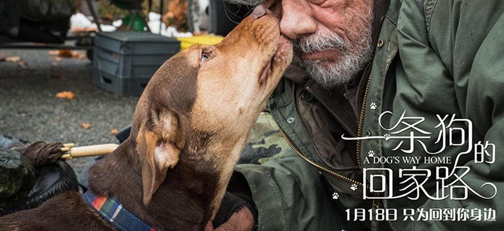 """《一条狗的回家路》曝中国风海报 首映获好评被赞""""适合全人类"""""""