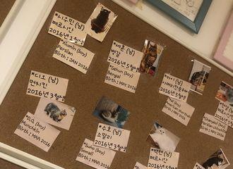 [分享]191019 一间所有猫咪都是以EXO成员的名字来命名的猫咪咖啡馆