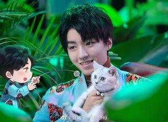 [分享]200221 饭绘喂猫少年王俊凯 大猫小猫都可爱