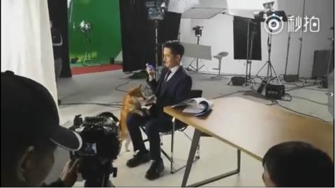 """[新闻]180404 猫奴胡歌竟然不得汪星人宠爱?广告拍摄现场沦为""""狗不理"""""""