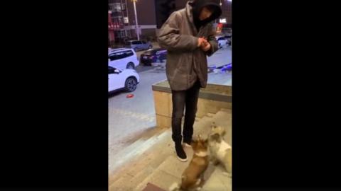 [分享]190506 全世界最暖心的刘宇宁 深夜街边喂食流浪狗