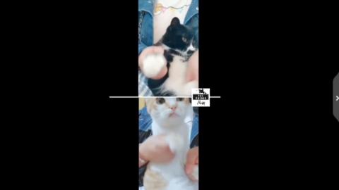 [分享]190502 吴亦凡粉丝皮出新高度:粉丝携猫在线尬舞并扬言接力battle