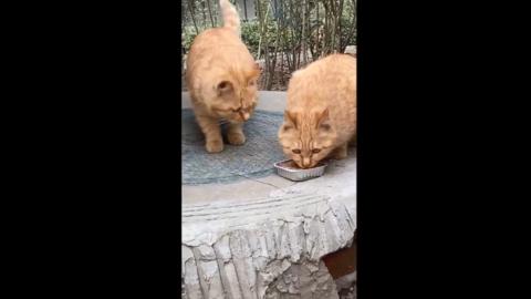 [新闻]200226 人美心善的贝贝拥有独特的喂食技能 流浪猫们一周也能喂得又胖又壮