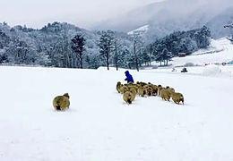 170109【孝渊】《孝渊的千万LIKE》雪原里放羊的孝渊
