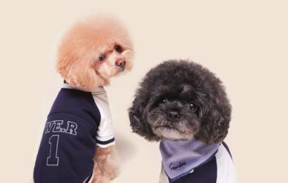 [新闻]140325 伯贤为动物设计夹克 收益将捐赠