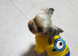 [分享]161006 又秀恩爱!可爱豆粒儿的小黄人时尚