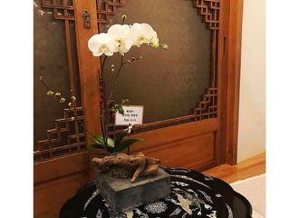 [分享]170326 乔妹为好友新店开业送上蝴蝶兰 展现素雅好品味