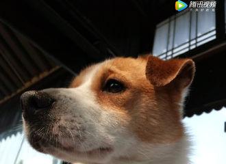 [分享]170526 鹿大摄影师新作 来自高冷小帅狗的无视