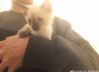 [新闻]170821 千玺猝不及防更博晒自拍 怀里抱小猫咪引起众人羡慕