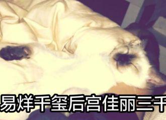 [分享]170909 易大佬后宫中受宠的二十来怼我们了 人不如猫系列!