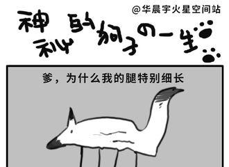[分享]181017 ET脑补华晨宇与狗子的日常故事 《神秘狗子的一生》了解一下