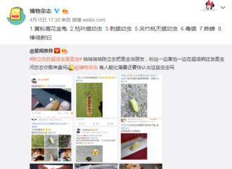 [分享]190416 博物杂志科普农糖找到的虫虫 被农农回复:虫虫博士你好