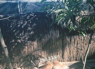 [GOT7][分享]190821 去悉尼了果然去动物园打卡 斑米去看袋鼠和考拉了