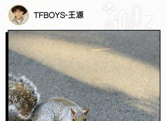 [新闻]191114 王源森林王国奇遇记 与小动物的奇妙缘分
