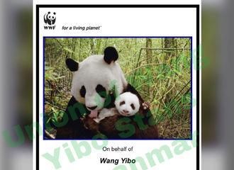 [新闻]200219 从考拉爸爸变成考拉&熊猫的爸爸 神仙站子为王一博收养四川熊猫