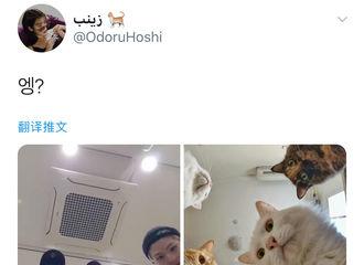 [分享]200223 推特热转:SEVENTEEN 96line都是可可爱爱的小猫咪呢!