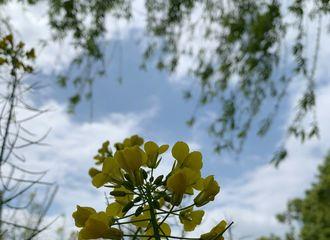 """[新闻]200402 吴摄影博主""""油菜花"""" 从他的镜头里看到了一整个春天"""