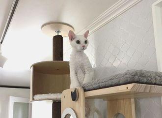 [分享]200405 果然是猫随主人!看布丁这一米八的大长腿~