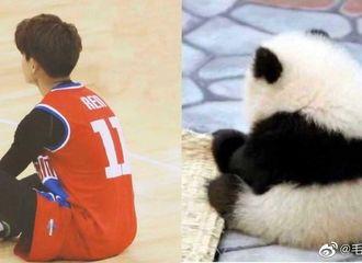 [分享]200811 论任嘉伦与熊猫的99%适配性 可爱程度连饲养员都会认错