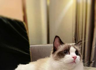 [分享]210118 张噜噜0118一周岁生日快乐,依旧是猫届美男!