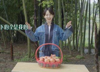 [新闻]210513 用刘星分饼行为打开杨紫分苹果 《向往的生活》创意预告笑点拉满!