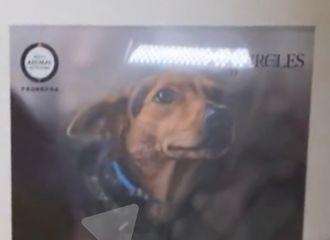[新闻]210610 无人在意的乐华公司角落 朱正廷做过的宠物公益项目被偶然发现